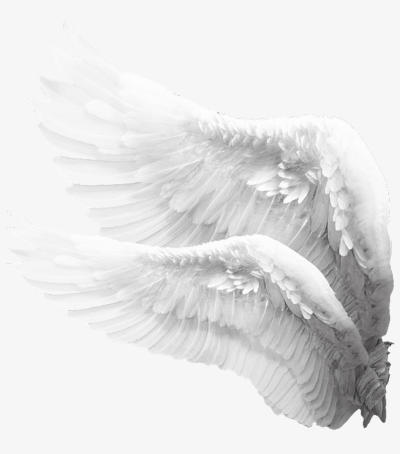 Sideview Angelwings Angels Angel Wings Feathers Angel Wings Png For Picsart Png Image Transparent Png Free Download On Seekpng