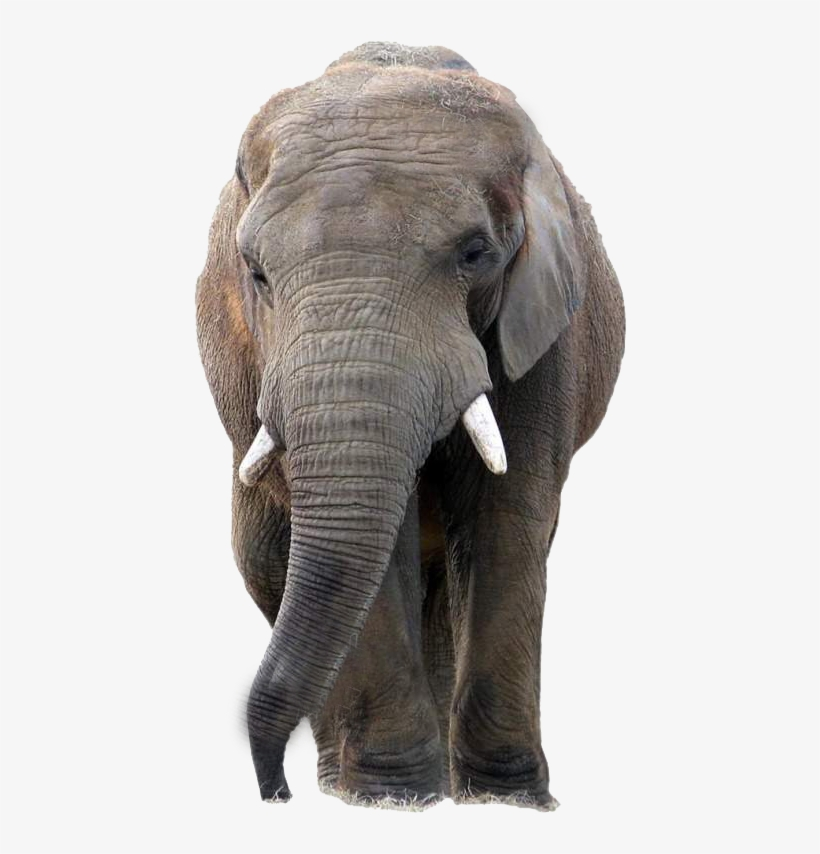 Transparent Background Elephant Png Png Image Transparent Png Free Download On Seekpng Elephant 2312 views image license: transparent background elephant png png