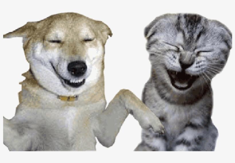 коты смеются гиф картинки готовится простых доступных
