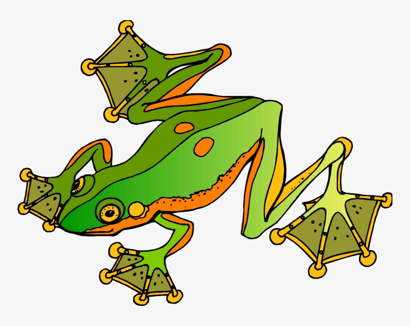 Tree Frog Clipart Pet Frog Cartoon Toad Feet Png Image Transparent Png Free Download On Seekpng Vector illustration of a cute green tree frog sitting on a water leaf to download for free. tree frog clipart pet frog cartoon