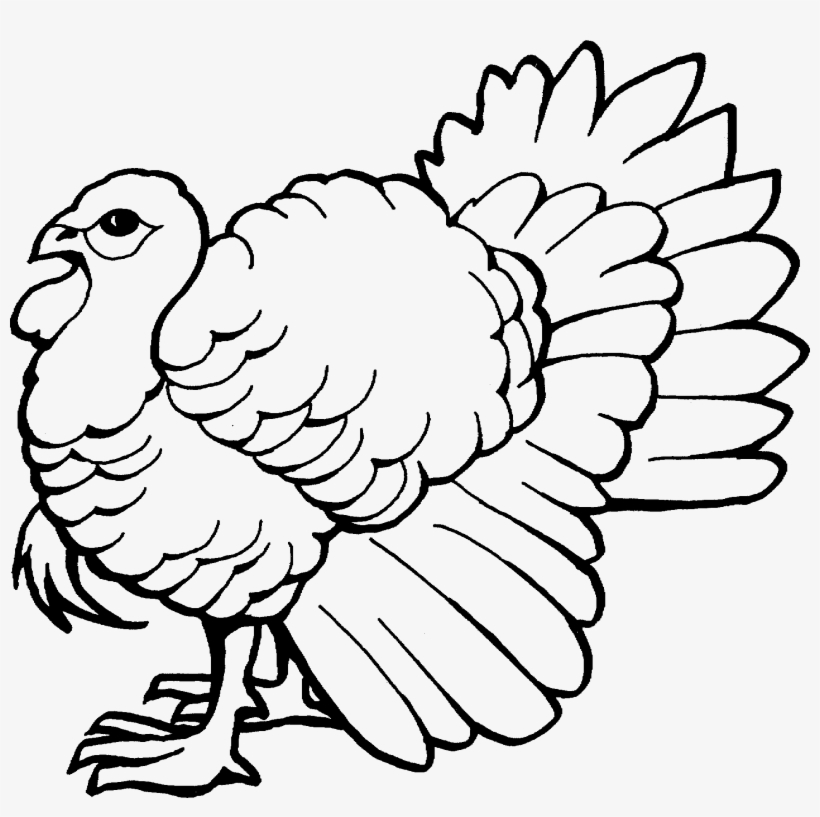 The Big Wild Turkey Coloring Pages - Easy Wild Turkey ...