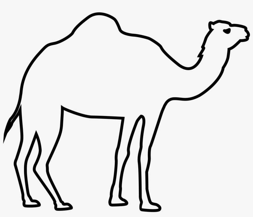 Картинки верблюда для срисовки, картинки животными без
