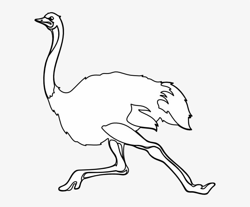Small Gambar Burung Unta Kartun Png