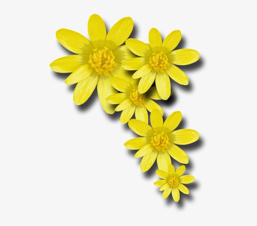 Foto Fiori Gialli.Go To Image Fiori Gialli Png Png Image Transparent Png Free