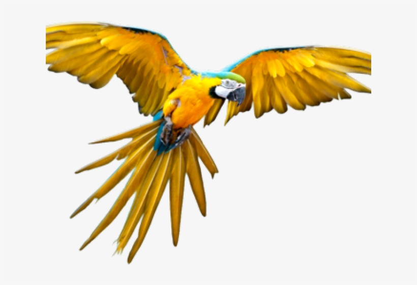Flying Parrot Png@seekpng.com