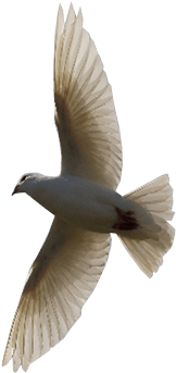 Flying Bird Png Image - Flying Bird Transparent Background