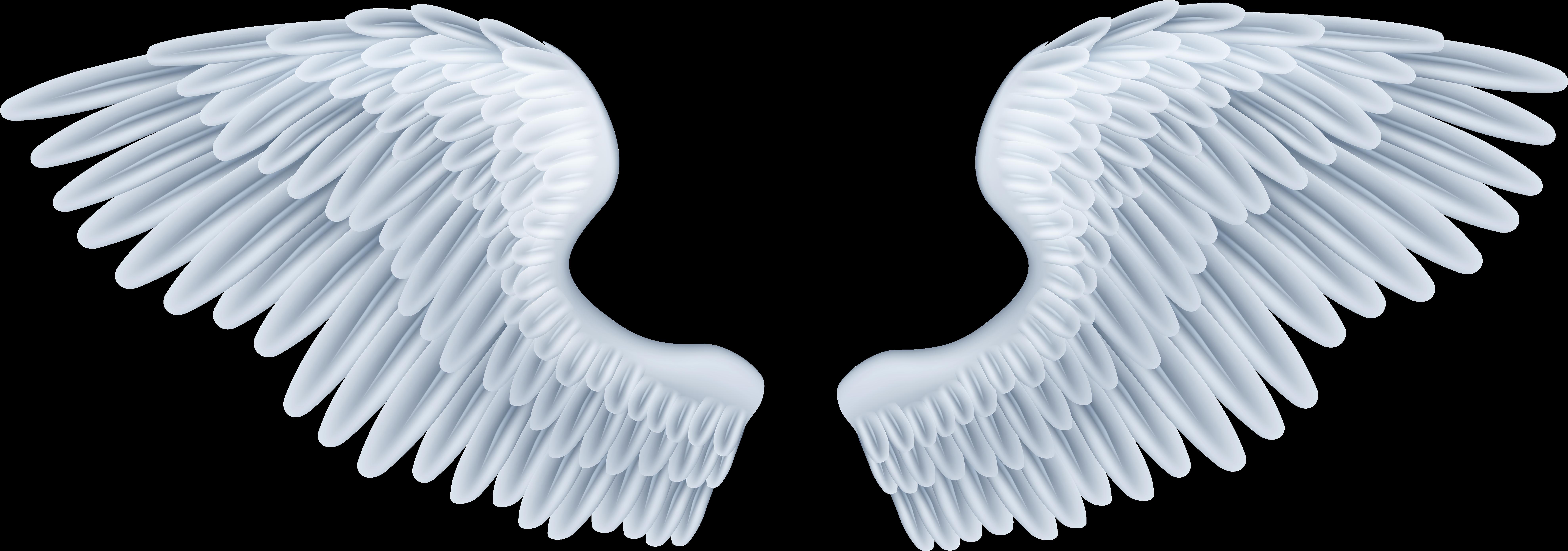 хотим поделиться картинка крыло ангела могли задать вопрос