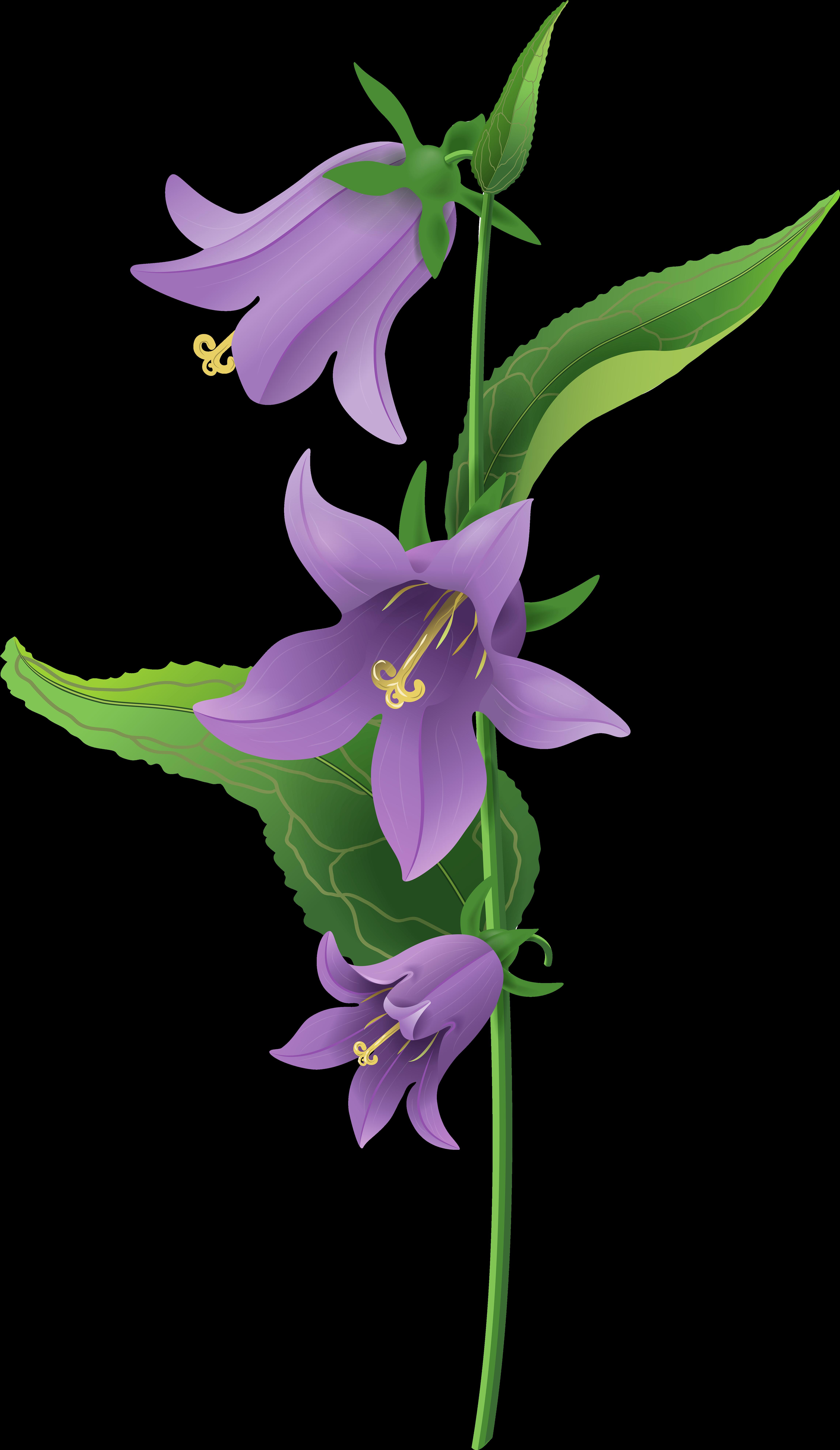 Цветы колокольчик картинки для детей на прозрачном фоне