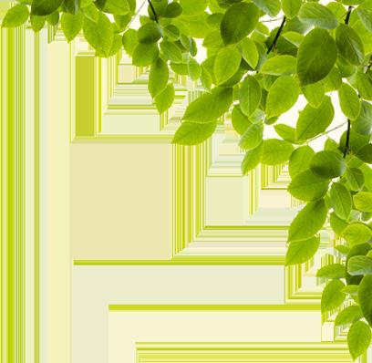 Filtervision - Ginkgo Biloba Leaf Png | Full Size PNG