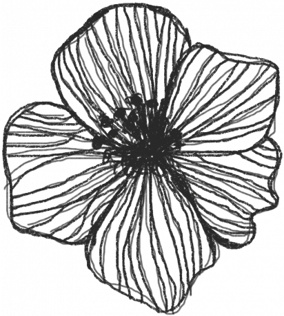 Drawn Flower Graphic By Melo Vrijhof Sketch Full Size Png Download Seekpng