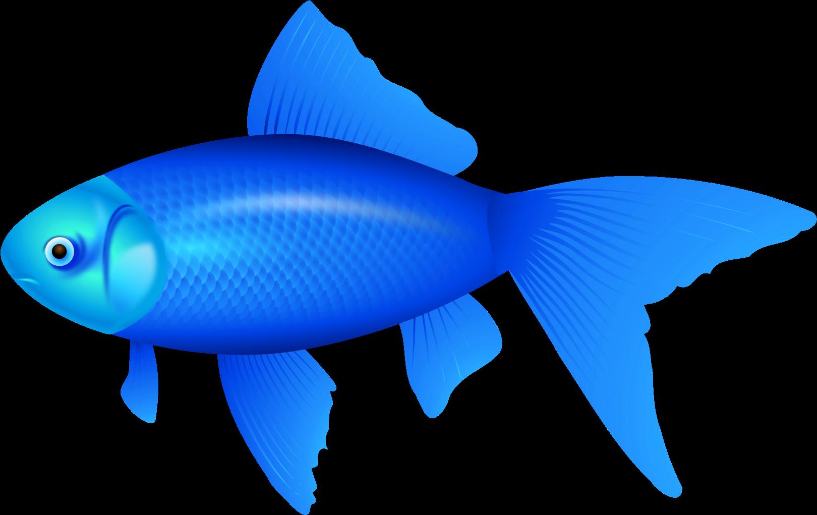 Голубые рыбки картинки для детей