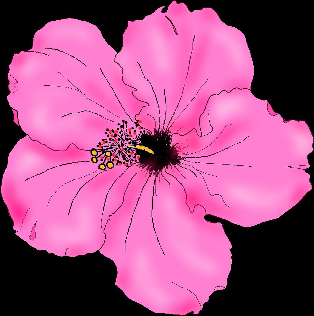 Hibiscus Transparent Drawn Pink Hibiscus Flower Drawing Full Size Png Download Seekpng
