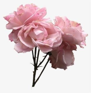 Flower Vintage Png Images Png Cliparts Free Download On Seekpng