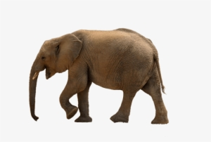 Free Png Elephant Png Images Transparent Forest Animals Png Hd Png Image Transparent Png Free Download On Seekpng Here you can explore hq elephant transparent illustrations, icons and clipart with filter setting like size, type, color etc. free png elephant png images