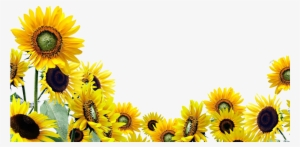 Sunflower Clipart PNG Images | PNG Cliparts Free Download ...