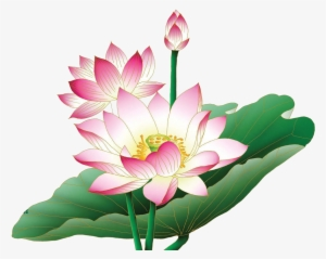 Lotus Flower Png Images Png Cliparts Free Download On Seekpng