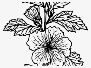 Drawing Tutoral Flower Crown Draw A Flower In Easy Way Png Image