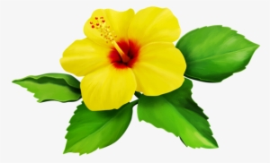 Hibiscus Flower Png Images Png Cliparts Free Download On Seekpng