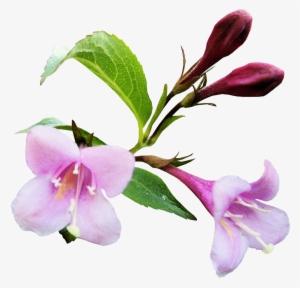 Dibujos De Flores Tumblr Esquineras Png Converter Photography Png