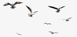 Birds Flying Png Png Images Png Cliparts Free Download On Seekpng