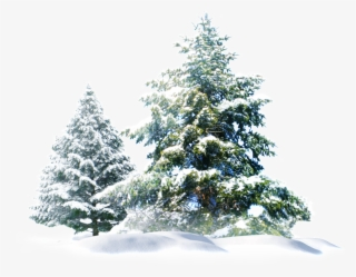 Free Png Snowy Tree Png - Snowy Trees Clipart Png, Transparent Png -  480x758(#1313643) - PngFind