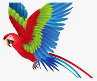 Colorful Flying Birds Png PNG Images | PNG Cliparts Free