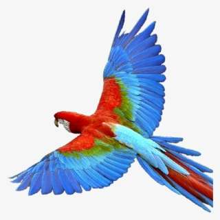 Colorful Flying Birds Png PNG Images   PNG Cliparts Free Download on