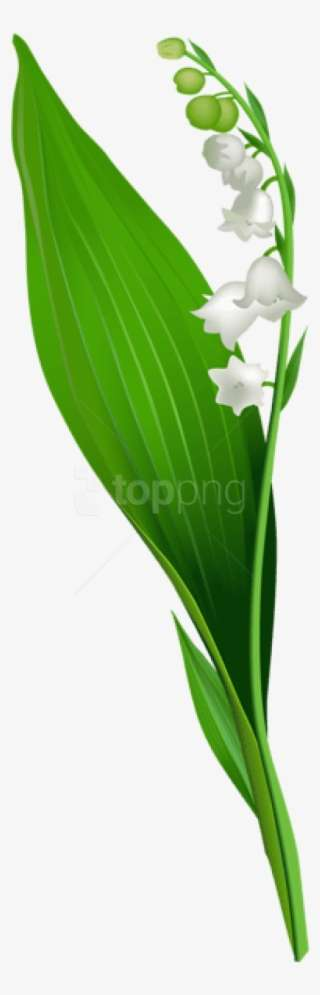 Of tattoo valley lily the Lily of