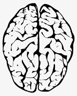 brain clipart png images png cliparts free download on seekpng brain clipart png images png cliparts